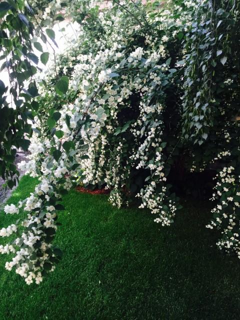 Kicsiház kert