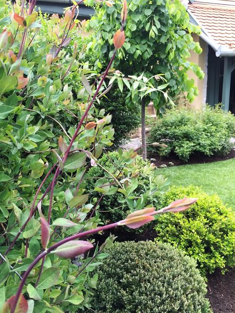 Kicsiház kerti növénykalauz / Kicsiház